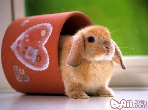 兔兔图片大全可爱