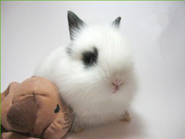 你关注过兔兔尿液的变化吗?