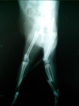 猫胫腓骨骨折的治疗方法
