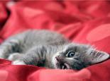 犬猫绝育手术前后注意事项