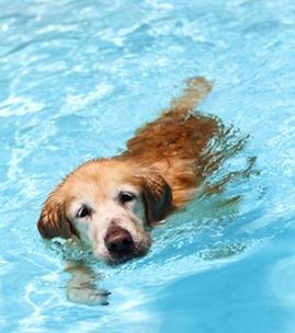 宠物骨折术后怎样进行功能锻炼