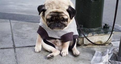 合格主人v主人,狗狗心事全面来到|成犬解析-波奇怀里饲养我表情包图片