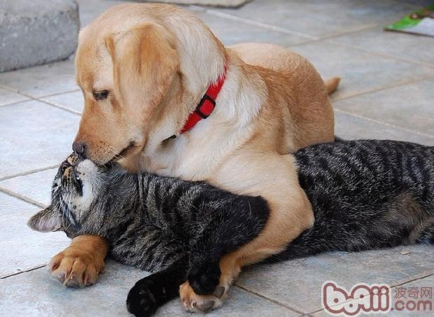 猫狗大不同,饲养有讲究图片