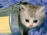 内华达猫猫咪档案