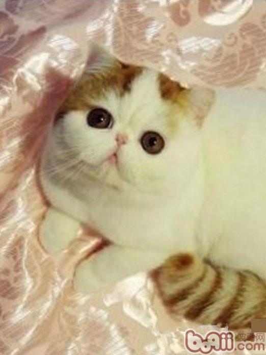 qq头像图片大全加菲猫