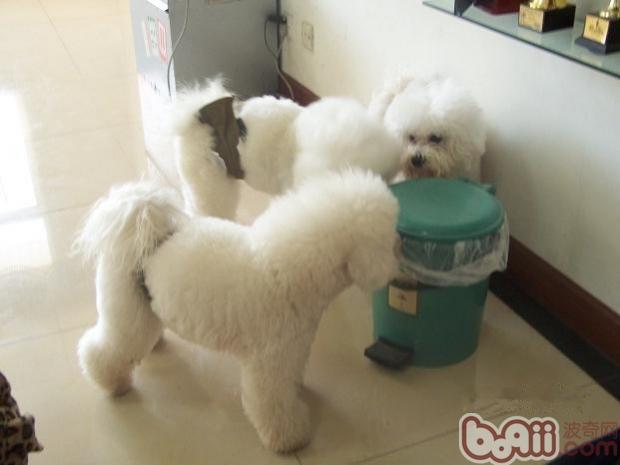 如何改善狗狗翻垃圾桶