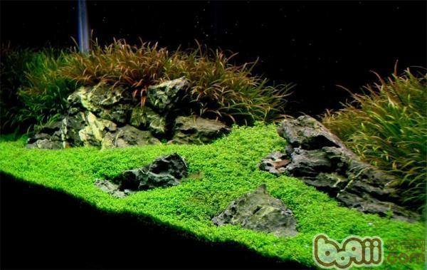 植物造景手绘立面图