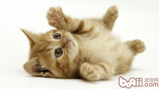 猫素描图片步骤