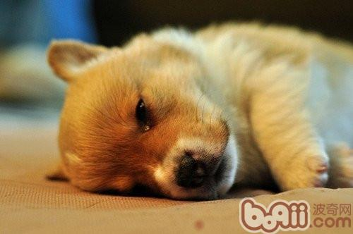 正确了解1狗狗的檄图片动哀乐大全搞笑图片v图片的图片