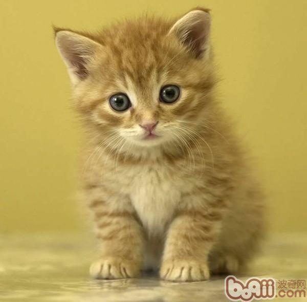 指南 教你判断小猫是否健康