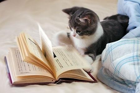 养猫常识全攻略