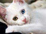 如何让猫咪记住自己的名字