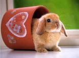 四招轻松训练兔兔上厕所
