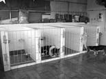 假期狗狗医院寄养的利弊分析