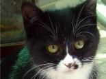 别犯懒,猫咪比你更讨厌脏猫砂