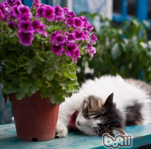 珍爱猫命,远离毒花