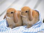 教你如何跟兔兔相处