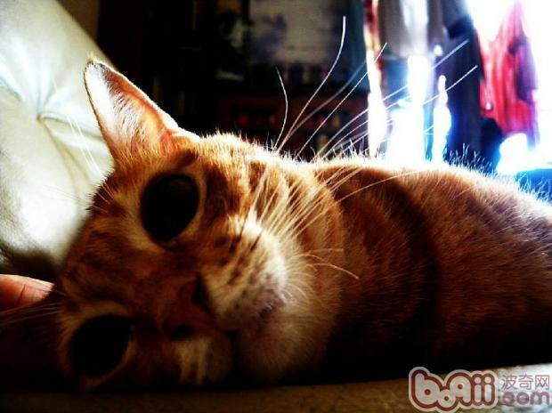 猫咪感冒时的症状
