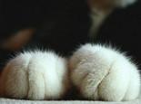 带你了解猫咪脚掌的秘密