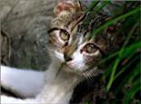成猫与老年猫的饮食注意事项