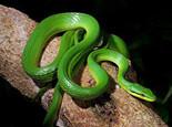 怎么选择合适的宠物蛇