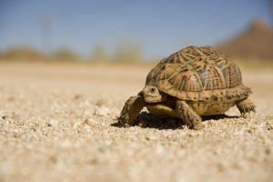 北美三种较受欢迎水龟的冬眠数据