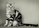 捉猫和抱猫怎样保证安全