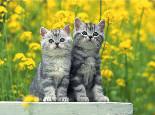 孕期猫猫怎样护理