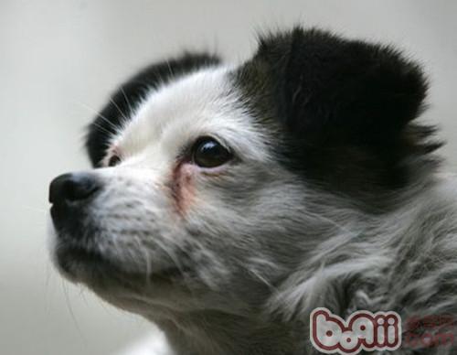 必威官网下载泪斑的应对方法