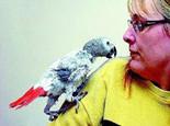 鹦鹉啄羽及忧郁症的治疗