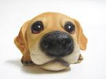 日常生活中需要为狗狗做的身体检查