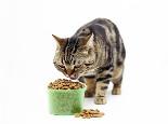对猫咪有益的食品有哪些