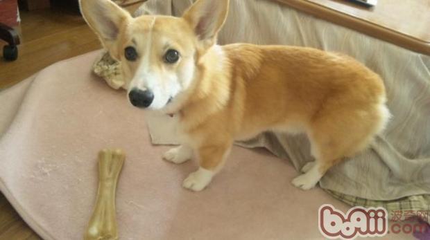 训练狗狗学会优雅进食