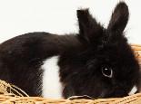 冬天兔兔需要人工保暖吗