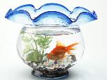 鱼儿的生活环境要素有哪些