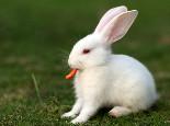怎样给兔兔换新粮