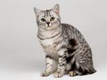 为什么猫咪乱吃胡萝卜容易中毒