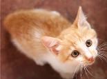 四款猫砂特点介绍
