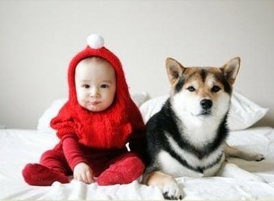 教导宝宝要正确对待狗狗是每位家长都需要学习的育儿经