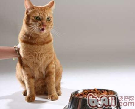 猫咪营养需求小贴士