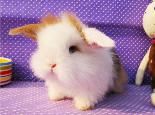 如何正确训练宠物兔
