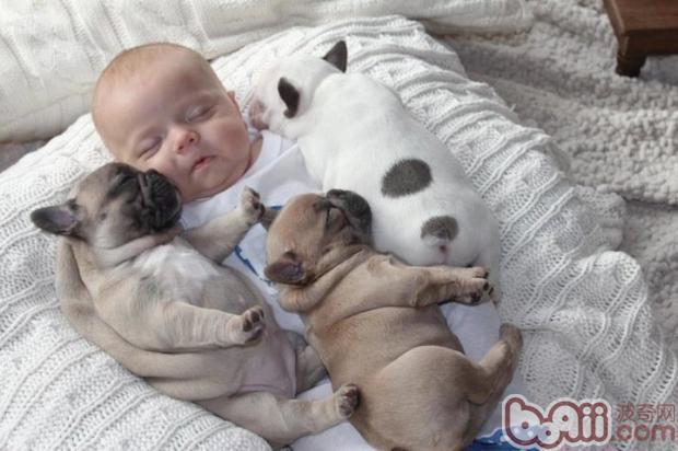 让狗狗接受刚出生的小宝宝是每位准妈妈准爸爸的必修课