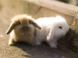 教兔子像猫咪一样上厕所