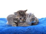 猫咪常用的猫砂之膨润土砂