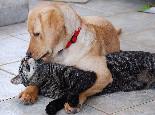 猫狗为啥一见面就要打架