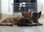 猫咪在床上尿尿怎么办