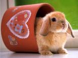 新老兔粮应该怎样更换