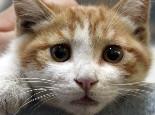 猫咪得了抑郁症怎么办