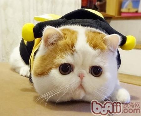 【加菲猫食品招商加盟】