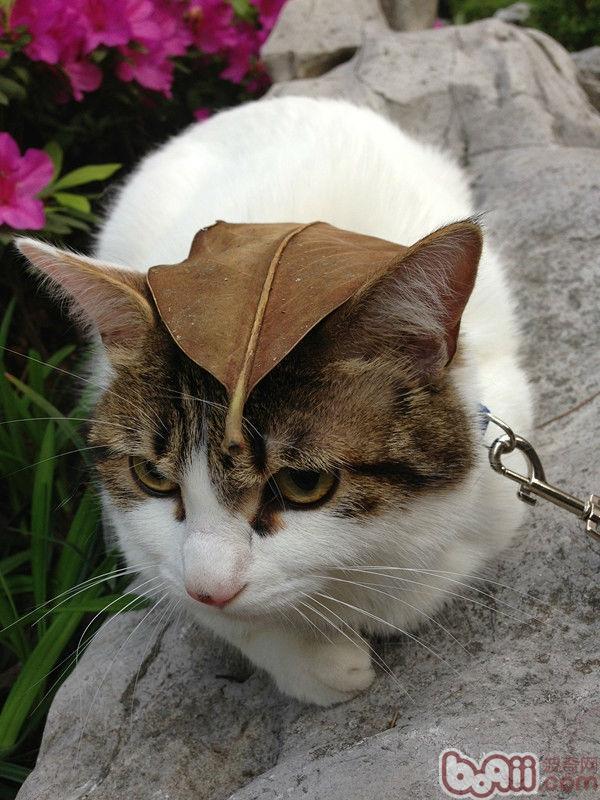 欧式阳台猫